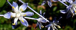 Consulta plantas fichas con los cuidados de las plantas - Jacinto planta cuidados ...