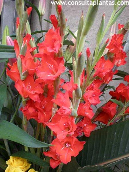 Consulta plantas fichas con cuidados de plantas - Plantas de navidad cuidados ...