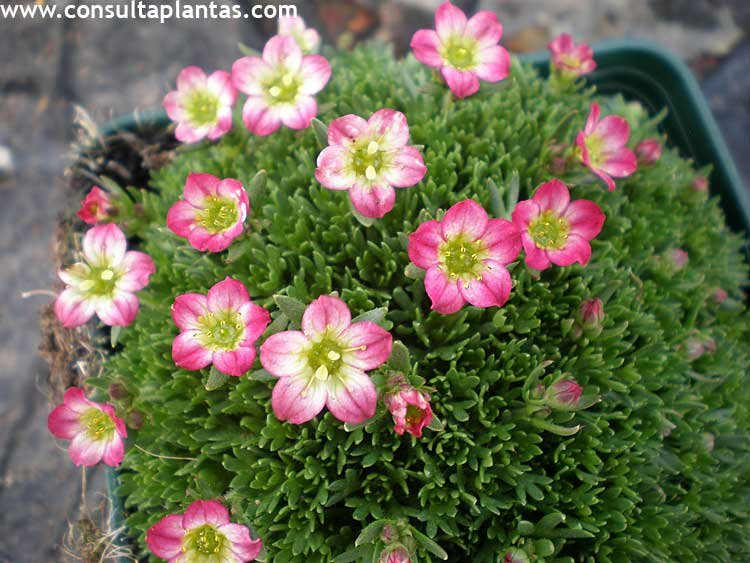 Fotos de rosas flores y jardineria tattoo design bild for Jardineria fotos