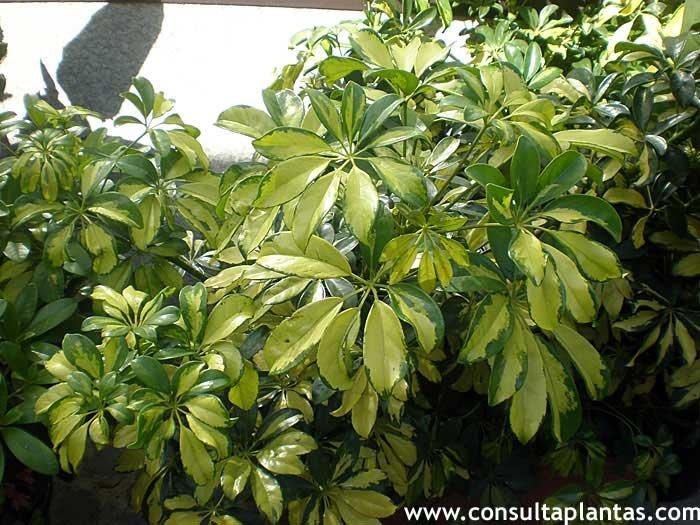 Consulta plantas fichas con cuidados de plantas - Jacinto planta cuidados ...